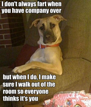 most interesting fart dog in theorld