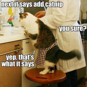 Funny Picture - Next it says ad catnip - Baking cat