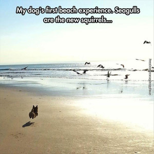 funny-pictures-seagulls-are-the-new-squirrels