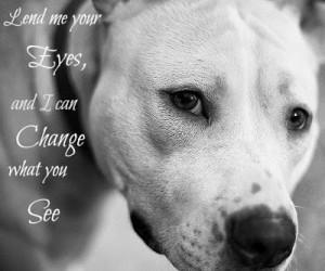 Pitbull Quotes...