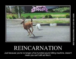 Tags: Killing Machine , Reincarnation