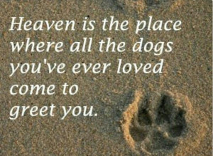 All dogs go to heaven♥