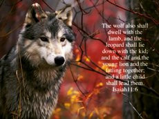 lamb,bible,bible verses,scriptures,god,holy spirit,wolf,wolves