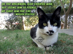 Funny Animal Quotes And Pictures About Life: Cat Birth Graphic And ...