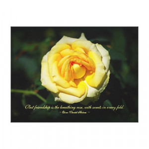 Friendship Quote Yellow English Rose Stretched Canvas Print by ...