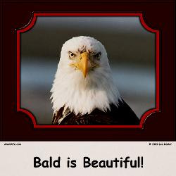 Bald is Beautiful!