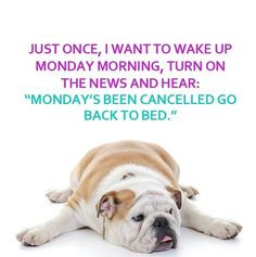 ... the week monday quotes happy monday monday humor monday morning More