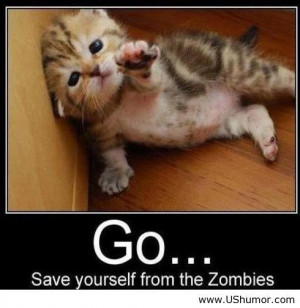 quotes for facebook funny animal pictures with quotes for facebook