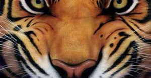 got the eye of the tiger, a fighter, dancing through the fire 'cause ...