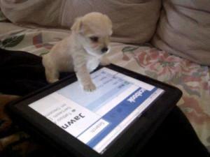 Algo más cute usando un iPad? Quizás un tierno cachorrito ...