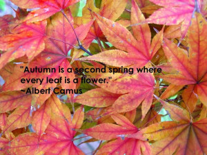 Spring Quotes And Sayings Autumn is a second spring when