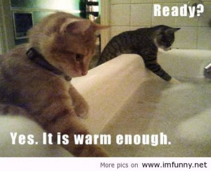 funny animals with sayings funny animals with sayings funny animals ...