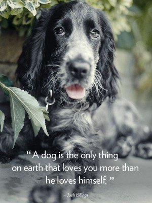 Quotes-About-Dogs-5.jpg