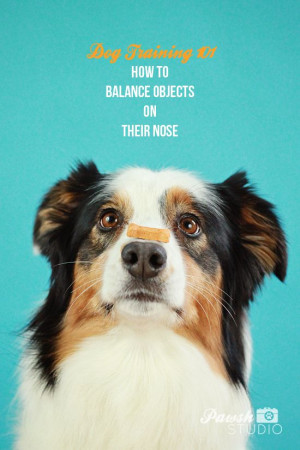 How To Train Dog To Balance Things On Nose