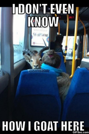 Funny-Saw-a-goat-on-a-bus-today.jpg