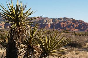 Mohave Desert Henderson Nevada