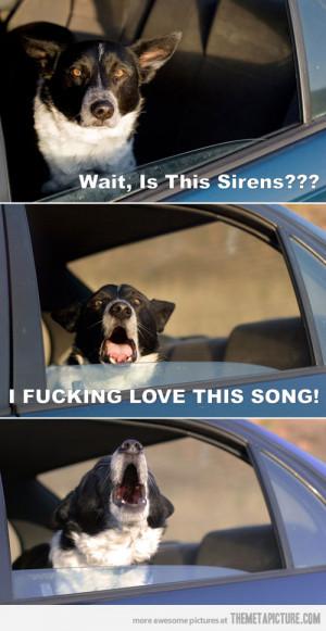 funny black bird singing