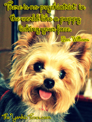 yorkie quotes yorkie dog quotes quotesgram 6909
