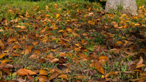 Crumbled leaves in the grass background