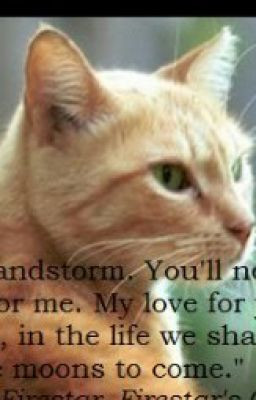 warrior cat quotes fanfic jul 27 2013 some quotes from the warrior ...
