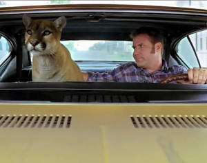 Riding with a cougar, I think I'm Ricky Bobby