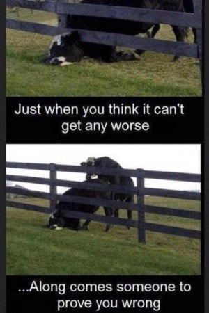 having a bad day funny pictures (16)