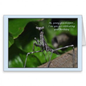 Young grasshopper praying mantis Birthday kung fu Card