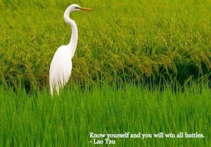 Lao tzu, quotes, sayings, know yourself, inspirational
