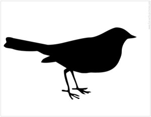 Animals Bird Birds Black