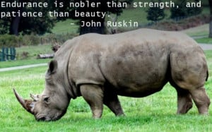 My Favorite Quotes About Strength, Courage And Not Giving Up