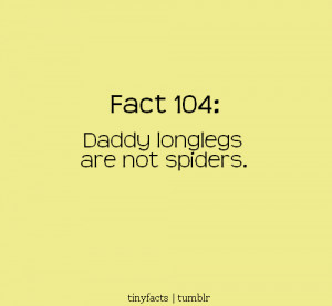 Daddy long legs are not spiders. – Fact Quote