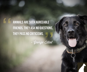 Animals Are Such Agreeable Friends. - Animal Quote