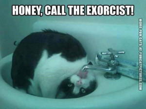 funny cat picture honey call the exorcist