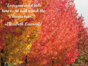 Fall Leaves Quotes Istock-foliage-with-quote
