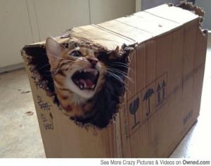 Schrödinger's cat? -