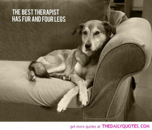 cats amp dogs quote