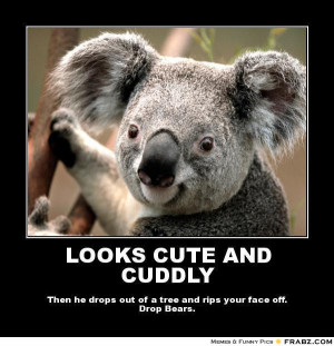 Koala Quotes. QuotesGram  Funny Koala Memes