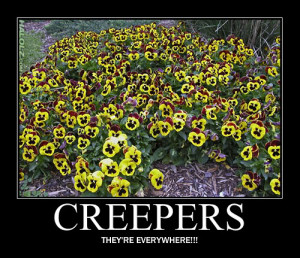 you post believe it or not there are creepers around