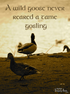 """wild Goose never reared a tame Gosling"""""""