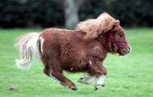comic pony bilder, comic pony foto - 1024 x 654 resolution