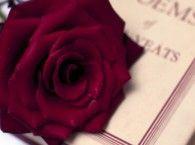 ... Love, Literature Quotes, Romantic Quotes, Literary Quotes, Best Quotes