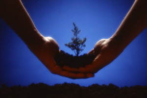 The Power Of Surrender: Just as the miracle of nature effortlessly