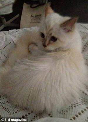 Thread: Meet Choupette, Karl Lagerfeld's New Kitten