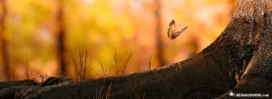 Orange Beautiful Butterfly Facebook Timeline Cover