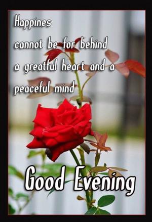 Good Evening-50