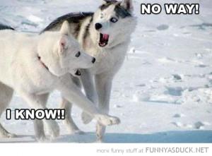 funny shocked dogs no way husky snow pics 300x221 funny shocked dogs ...