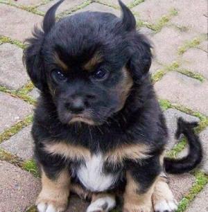Grumpy Dog