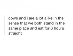 quotes, eat, food, tumblr, eating, quote, funny