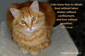 cat | Photo Quoto - Part 2