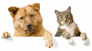 Dog and Cat above white banner looking at camera